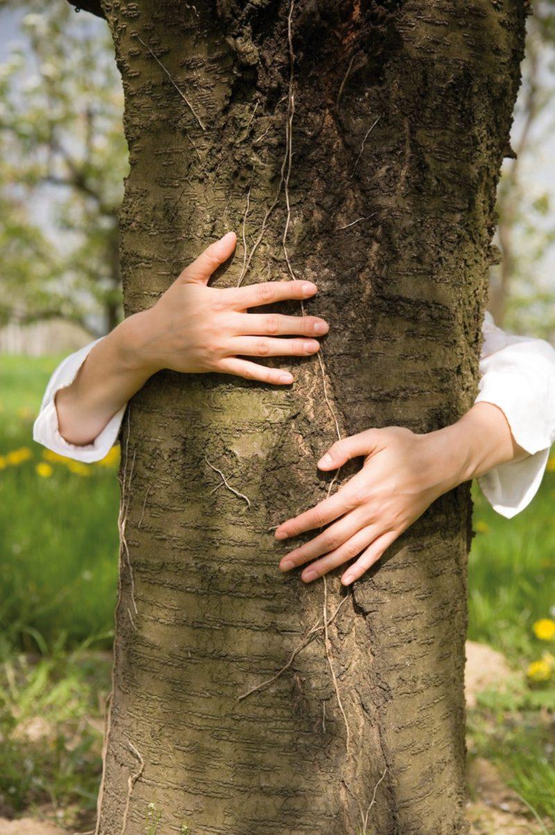 fsc ®-certificering: verantwoord omgaan met bossen